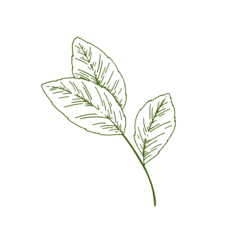 Logo English in Nature leaf green small